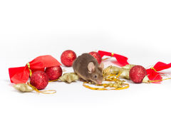 Sweet brown mouse sitting among red and gold Christmas decorations. Stock Image