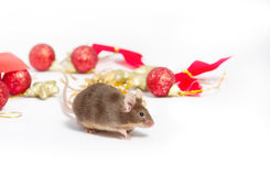 Sweet brown mouse sitting among red and gold Christmas decorations. Royalty Free Stock Images