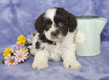 Sweet Brown and White Puppy Stock Photos