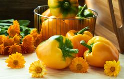Sweet yewllow pepper with calendula flowers on wooden background. Sweet bulgarian pepper laying with marigold flowers in front of steel basket with yellow pepper royalty free stock photography