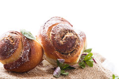 Sweet bun with nut filling in powdered sugar Stock Images