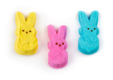 Sweet Bunnies Royalty Free Stock Photography
