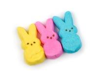 Sweet Bunnies Stock Photos