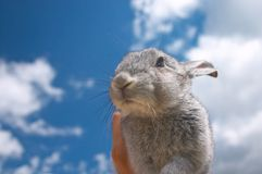 Sweet Bunny. Kids hands holding a sweet bunny rabbit stock photography