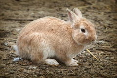 Sweet Bunny Stock Photo