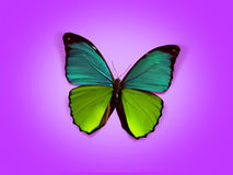 Sweet butterfly. In the air vector illustration