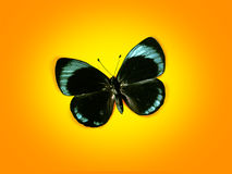 Sweet butterfly. In the air Stock Image