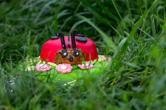 Sweet cake in the form of a young ladybug Stock Photo