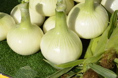 Sweet Candy Onions Stock Images