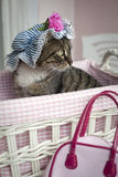 Sweet cat Royalty Free Stock Images