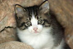 Sweet cat Stock Photo