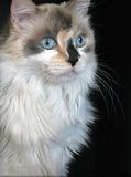 Sweet Cat Stock Photography