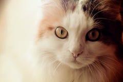Sweet cat. Beautiful cat looking soulful gaze Stock Image