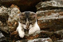 Sweet cat Royalty Free Stock Image