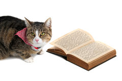 Sweet cat with bandana reading a book. On white stock photo