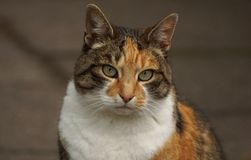 Sweet cat with beautiful fur Royalty Free Stock Photography