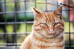 Sweet Cat Royalty Free Stock Photo