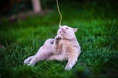Sweet cat on green grass.  stock photo
