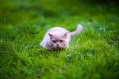 Sweet cat on green grass.  stock photography