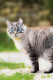 A sweet cat Royalty Free Stock Images