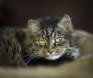 Sweet cat look at camera, close up Royalty Free Stock Photo