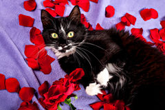 Sweet cat lying on the red rose petals Royalty Free Stock Image