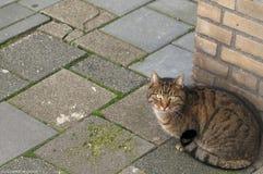 Sweet cat sitting on the street stock photos