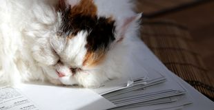 Sweet cat sleeping on a stack of papers classtests Stock Photo