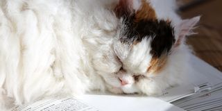 Sweet cat sleeping on a stack of papers classtests Stock Image