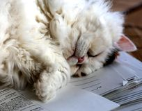 Sweet cat sleeping on a stack of papers classtests Royalty Free Stock Images