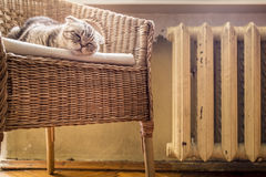 Sweet cat sleeps on a chair near the hot and heated battery Royalty Free Stock Photos