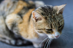 Sweet cat at street Royalty Free Stock Images