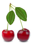 Sweet cherries royalty free illustration