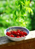 Sweet cherries. Sweet red cherries. Freshly picked heap of cherries Stock Image