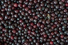 Sweet cherries background. Background of sweet and fresh organic dark cherries royalty free stock images