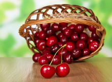 Sweet cherries in basket. Heap of sweet cherries in wicker basket on table Royalty Free Stock Images