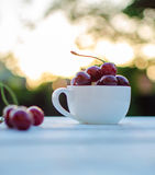 Sweet cherries in a cup on a wooden table. And sun rays Stock Photo
