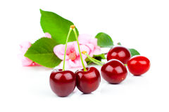 Sweet cherries with flowers Royalty Free Stock Images