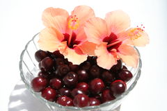 Sweet cherries in glass bowl. Cherries together with Hibiscus flower Royalty Free Stock Image