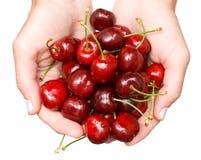 Sweet cherries in hands Stock Image