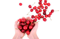 Sweet cherries in the hands. Of european girls. Sweet cherries is scattered on the table. Isolated on white Royalty Free Stock Photography