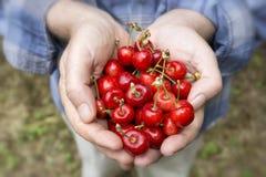 Sweet Cherries Stock Photos