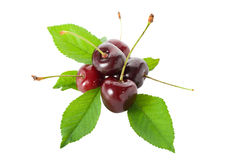 Sweet cherries with leaves Stock Photos