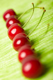 Sweet cherries in a row Stock Images
