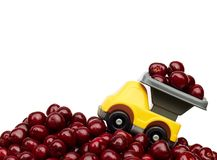Sweet cherries with toy children car carrying a full trailer of berries. Toy car carrying sweet cherries up to the mountain of cherries isolated on white stock image
