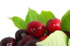 Sweet Cherry Stock Photography