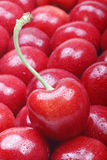 Sweet cherry. Close-up of a sweet cherry on cherry background Stock Photography
