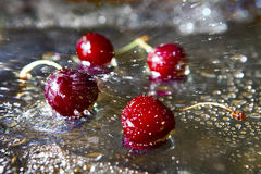 Sweet cherry. Stock Image