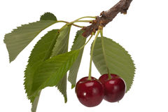 Free Sweet Cherry Stock Images - 20045974