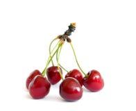 Sweet cherry Stock Photography